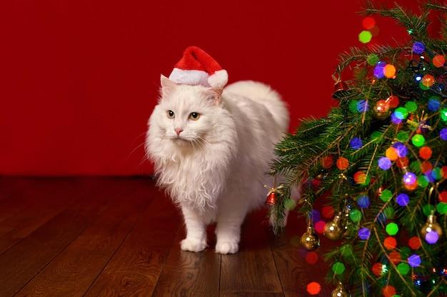 Новый год, рождественский кот в новогодней шапке на фоне елки и огней