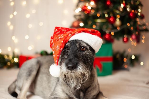 新年のコンセプト、クリスマス。花輪とクリスマスツリーの背景にサンタクロースの帽子のひげを生やした面白い犬。