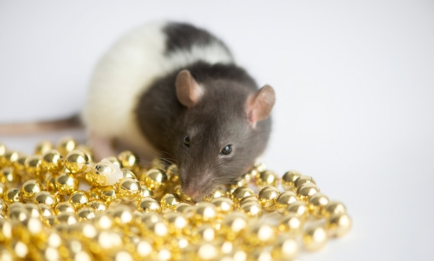 Новогодняя концепция. симпатичная белая домашняя крыса в новогоднем декоре. символом года 2020 является крыса