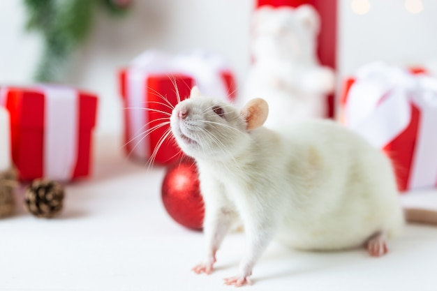 New year . cute domestic rat in a new year's decor. symbol of the year 2020 is a rat.
