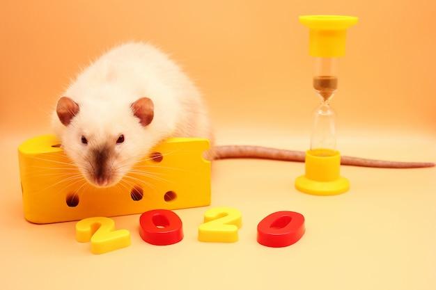 おもちゃのチーズと砂時計で新年ネアラット。新しい年が来ています。