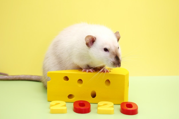 New year number 2020 and the decorative rat with a toy cheese