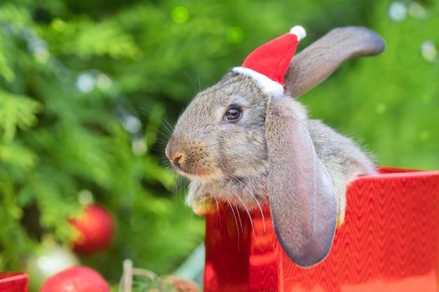 새해 애완 동물. 작은 토끼, 전나무, 크리스마스 트리 근처 선물 상자에 산타 클로스 모자에 아기 토끼.