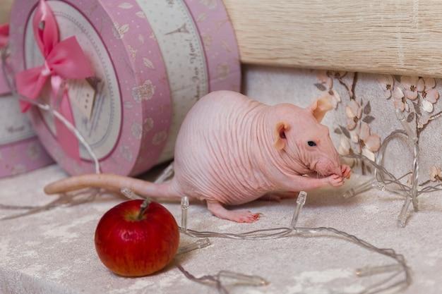 Новогодняя лысая крыса-сфинкс