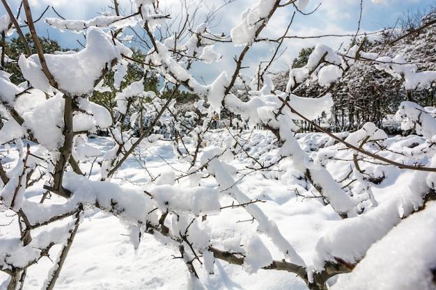 雪の中でニューヨークシティセントラルパーク