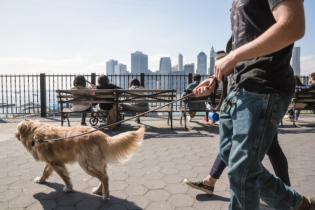 New york, usa - apr 27, 2016: group of young people walking with a dog on brooklyn heights promenade. people relax and enjoy the stunning views of manhattan