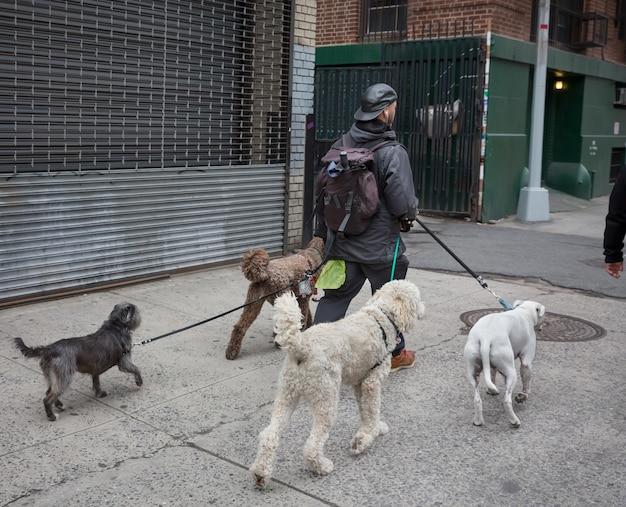 ニューヨーク、アメリカ合衆国-2016年5月2日:マンハッタンのニューヨークシティドッグウォーカー。大都市の通りの動物とその飼い主。ニューヨークの路上で犬。
