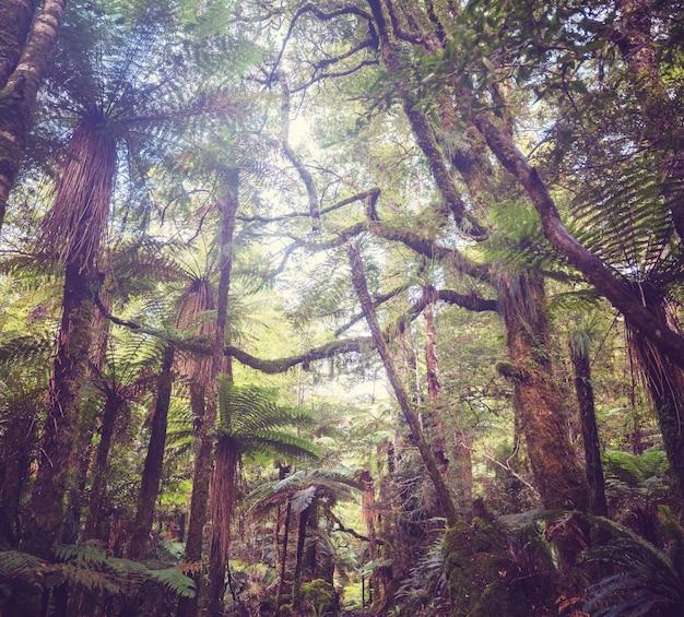 ニュージーランドの熱帯ジャングルの森。緑の自然な背景