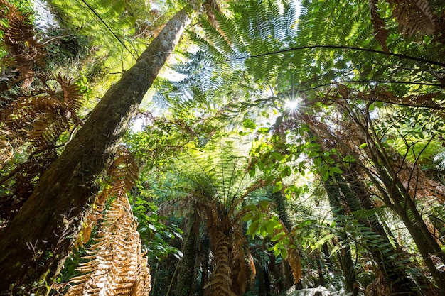 New zealand tropical jungle forest.