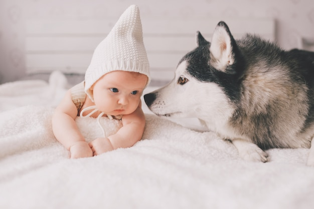 Newborn baby lifestyle soft focus portrait lying on back together with husky puppy on white bed. little child and lovely husky dog friendship. adorable infant funny child in cap resting with pet.