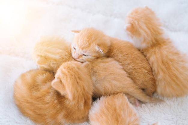 Newborn baby red cat sleeping on funny pose group of small cute ginger kitten domestic animal sleep and cozy nap time comfortable pets sleep at cozy home selective focus