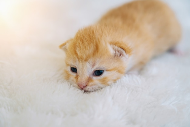 Newborn baby red cat sleeping on funny pose group of small cute ginger kitten domestic animal sleep
