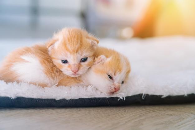 Новорожденный рыжий кот спит в смешной позе группы маленьких симпатичных рыжих котят, спящих домашних животных