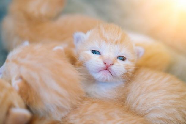 신생아 빨간 고양이 자 선택적 초점