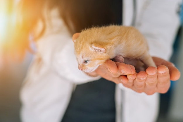 Newborn baby red cat sleeping in woman hands group of small cute ginger kitten domestic animal sleep and cozy nap time comfortable pets sleep at cozy home selective focus