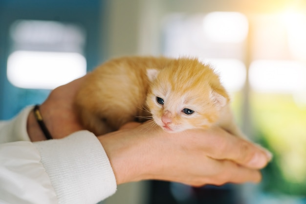 Newborn baby red cat sleeping in woman hands group of small cute ginger kitten domestic animal sleep...
