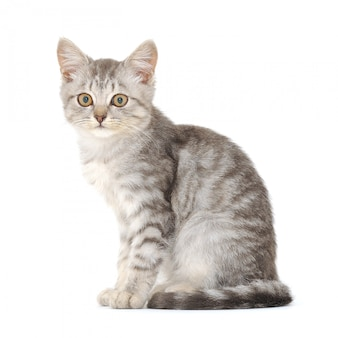 Newborn kitten isolated on bright background