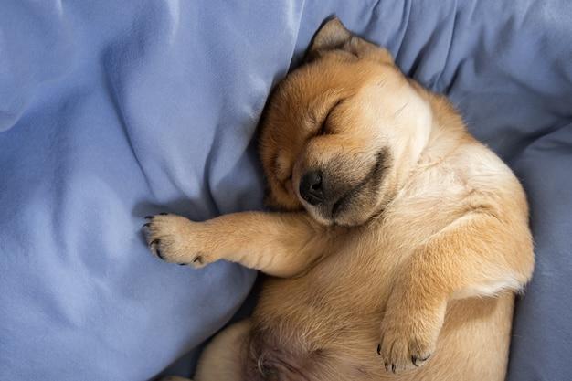 담요에 꿈을 꾸고 신생아 강아지