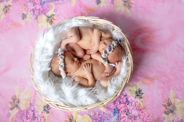 Newborn twins sleep in a basket on a pink bright background