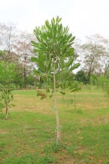 庭に一列に植えられた新木