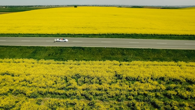 A newlywed couple is driving a convertible retro car on a country straight road for their honeymoon, rear view. way on spring field of yellow rapes flowers, rape, canola field.