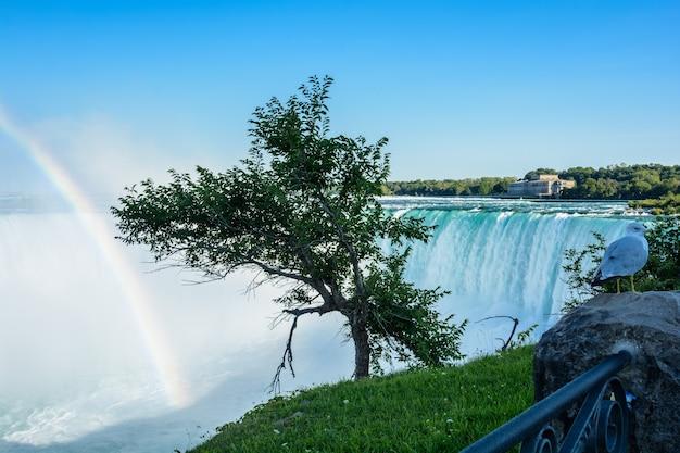 Ниагарский водопад, подкова радуга и чайка. красивая разноцветная радуга на фоне водопада