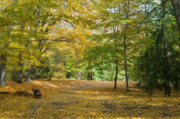 都市公園の美しい秋。太陽の光でカラフルなカエデの木。秋の美しさ自然シーン。 niasvizh、ベラルーシの秋の公園
