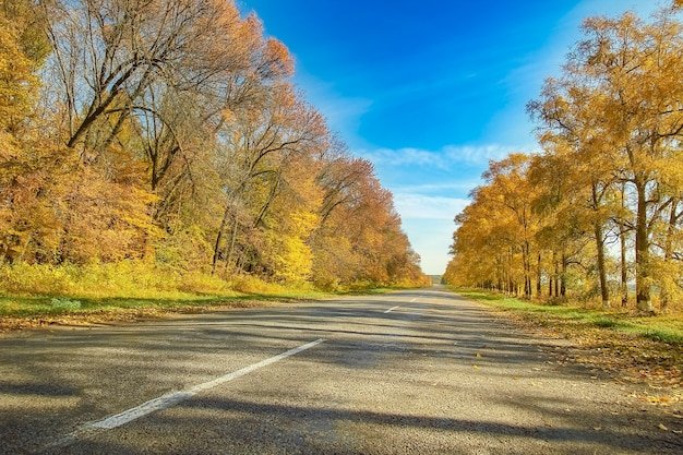 旅行のための素敵な美しい秋の道