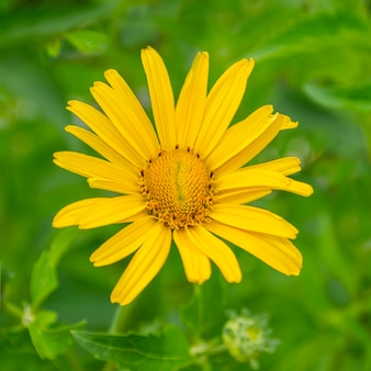 Nice and beautiful yellow color flowers ornamental plants and full of green leaves in a garden