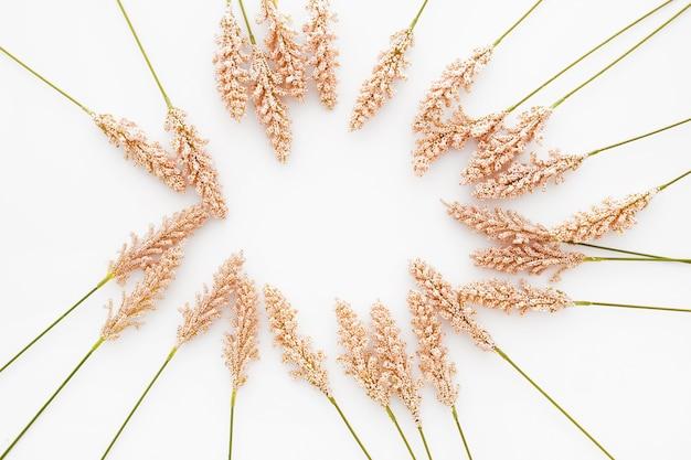 Хорошая композиция из листьев пшеницы на белом фоне
