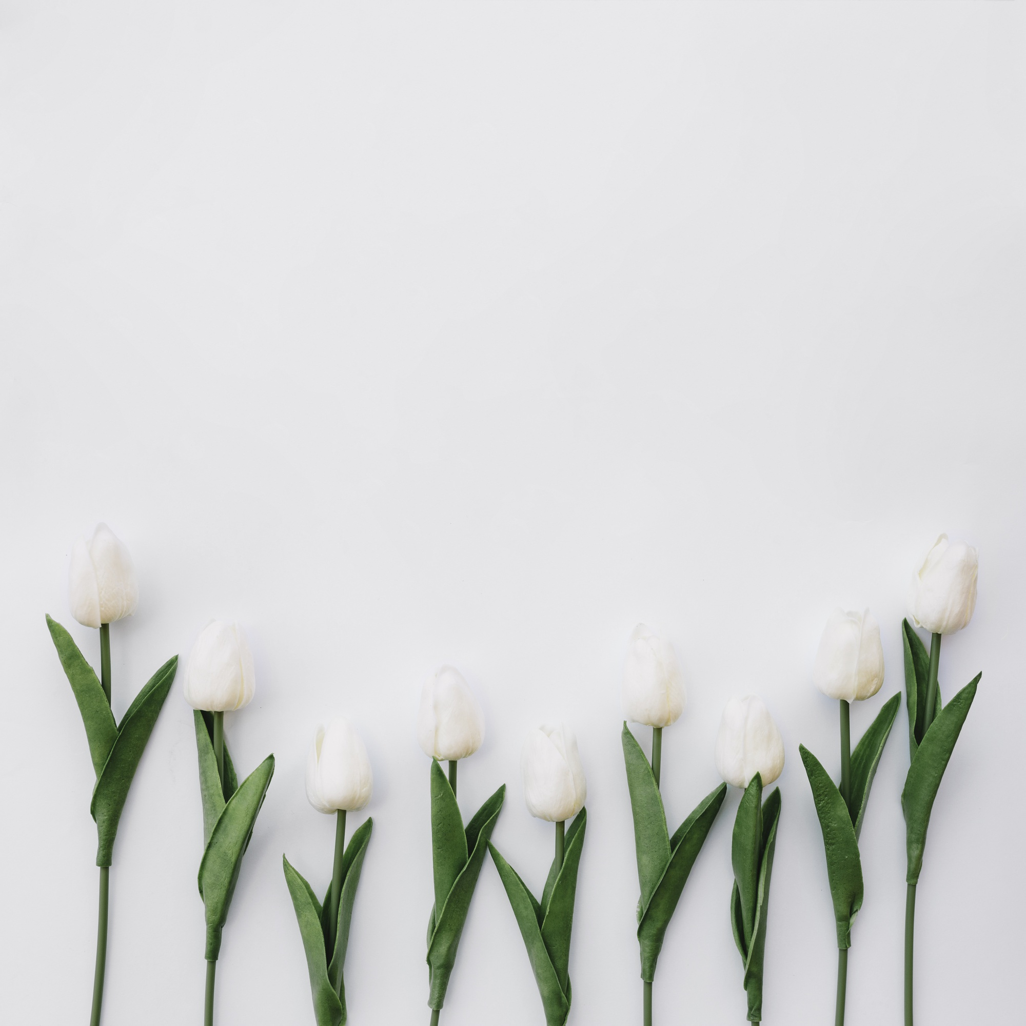 Nice composition with beautiful tulips on white background with space on top
