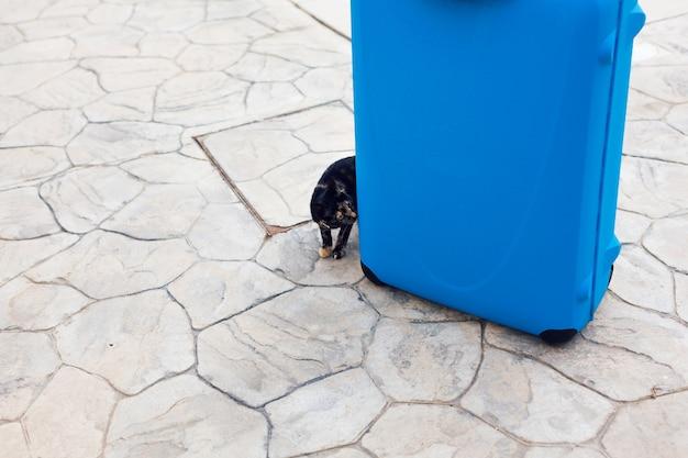 大きな青いスーツケースの近くの素敵な飼い猫