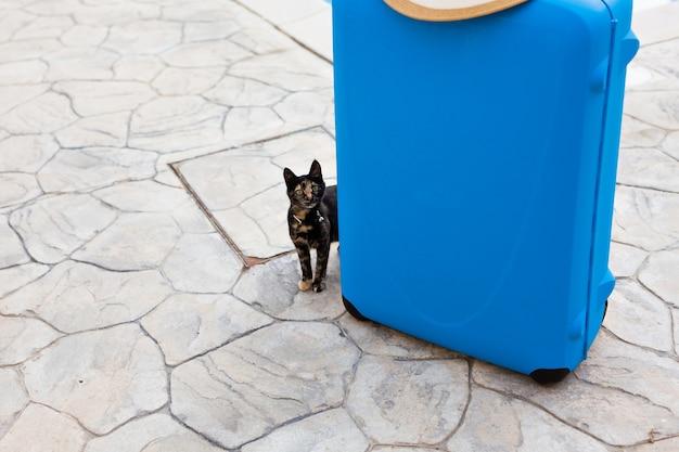 スーツケースの近くの素敵な飼い猫。