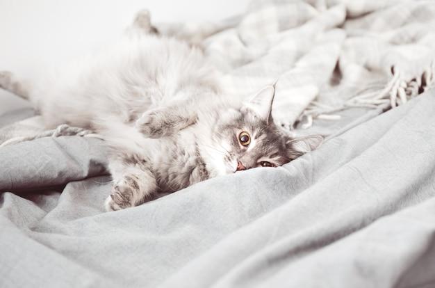 Милый пушистый котик лежит на кровати с серым постельным бельем и мягким шерстяным покрывалом или стеганым одеялом. милый кот спал на кровати, покрытой мягкими тканями.