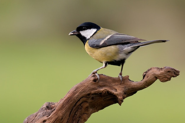 Nice little bird on a branch