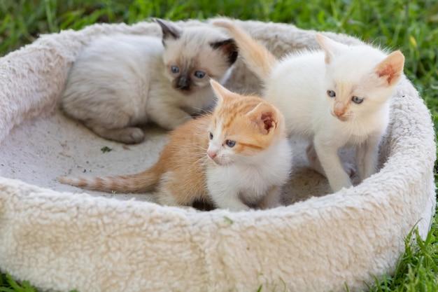 Симпатичные маленькие котята в постели на траве