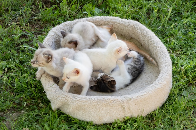 Nice little kittens in  their bed on the grass