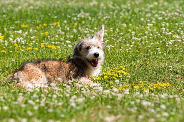 晴れた夏の日に芝生で遊ぶ素敵な雑種の子犬