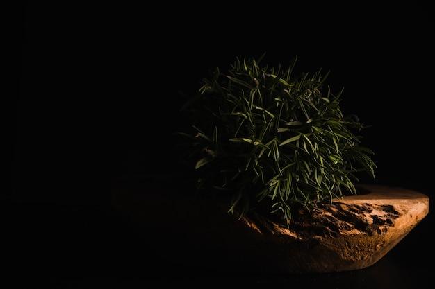 ニース鉢植え