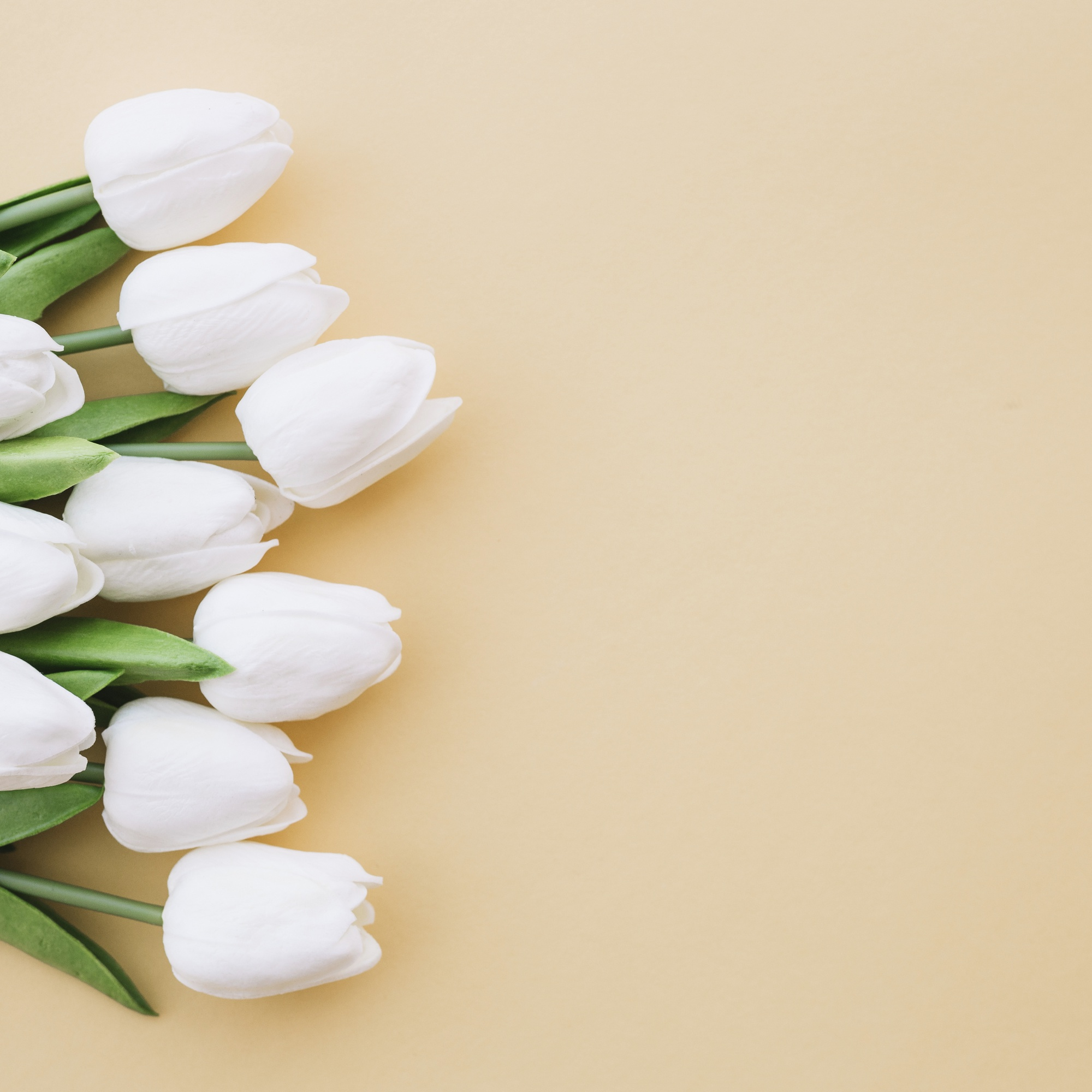 Nice tulips on yellow background with space on the right