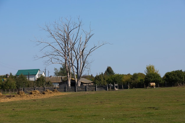 乾いた木々のある農場、牧場の素晴らしい眺め。