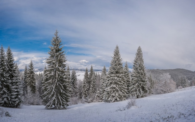 Nice winter landscape with snowy trees in forest, white snow and blue sky
