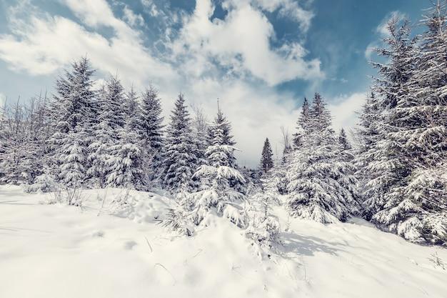 Красивый зимний пейзаж с заснеженными деревьями в лесу, белым снегом и голубым небом