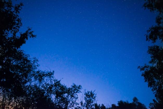 スペースの背景として明るい星と森の夜の紺碧の空