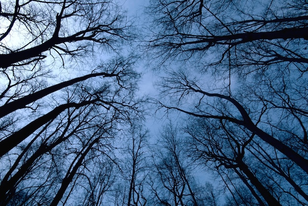 Night forest scene, top view of trees during dark time