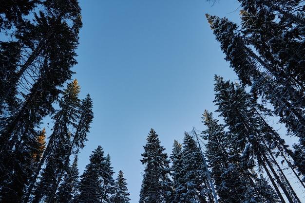 暗い森の夜、クリスマス前の森の中の散歩。