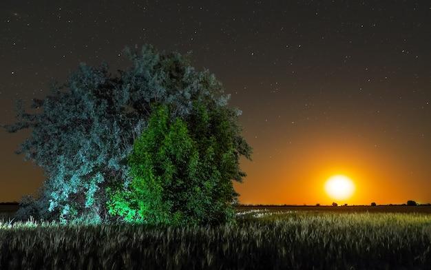 시골의 밤. 필드와 달에 혼자 나무
