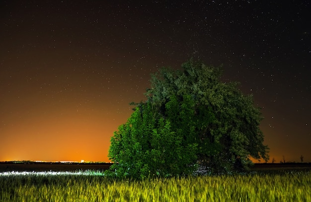 시골의 밤. 필드에 혼자 나무