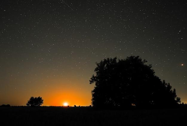 시골의 밤. 들판의 나무와 달이 뜨다