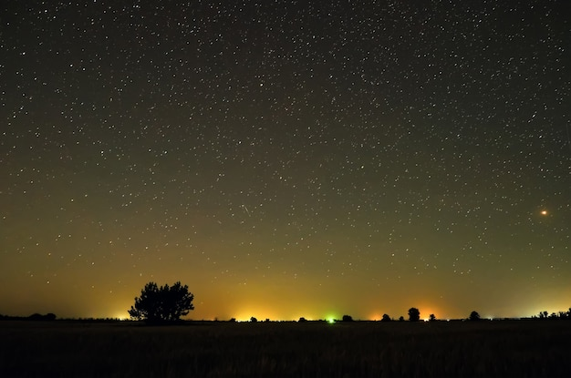 시골의 밤. 들판의 나무들
